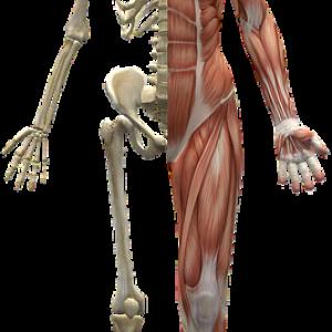 Terapia stawów skroniowo-żuchwowych a mięśnie dna miednicy
